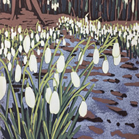 /library/uploads/Images_S8/3 Snowdrops and Melting Snow.jpg